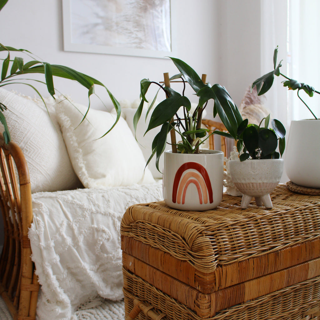 Styling Your Indoor Plants with The DIY Decorator