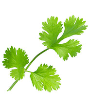 Load image into Gallery viewer, Coriander