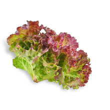 Load image into Gallery viewer, Red Lettuce