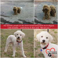 Danny & Ron's Rescue dog Jon featured on Shapley's  Canine Care Conditioning Shampoo