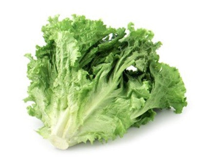 Organic Lettuce Green Leaf - Each