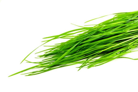 Organic Sprouts Wheatgrass Bag - 454g