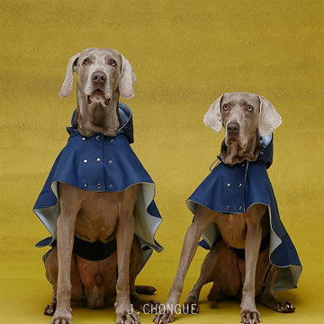Cape William Dog Raincoat by The Painter's Wife
