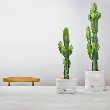 Self Watering Planter by Angus & Celeste