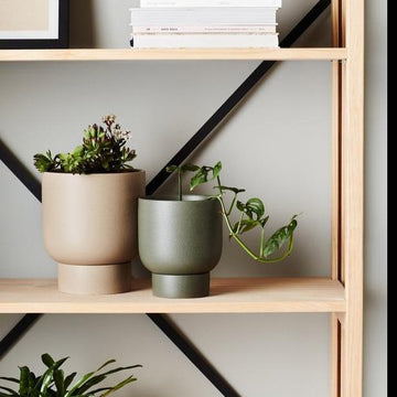 Dusk Finch Planter by Evergreen Collective
