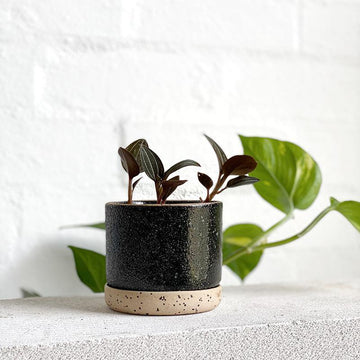 Charred Embers Bowl Planter by Zakkia