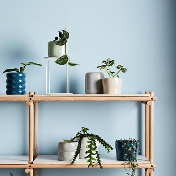 Luna Planters by Evergreen Collective