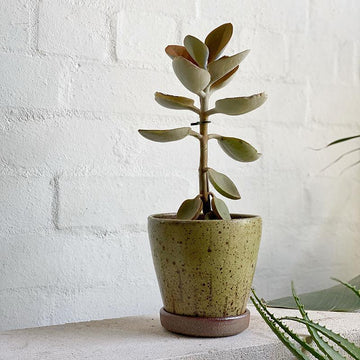 Olive Carved Glaze Wood Fired Planters by Sandra Bowkett