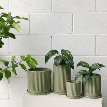 Sage Fluted Planter by Arcadia Scott