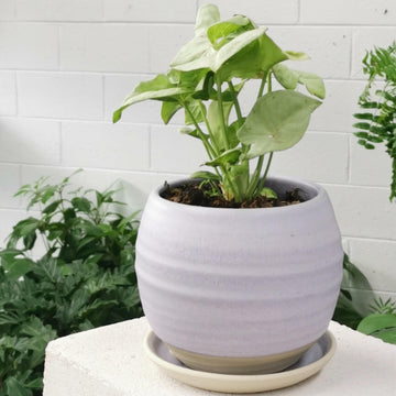 Round Planter by Katherine Mahoney