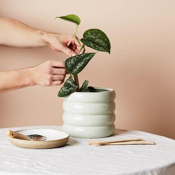 Medium Luna Planter by Evergreen Collective