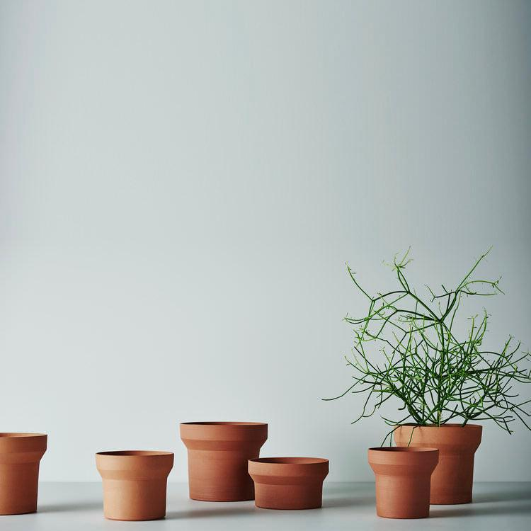 Funnel Planters Terracotta by Anchor Ceramics with Rhipsalis
