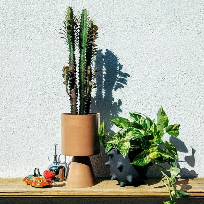 Spike Planter by Buzzby & Fang