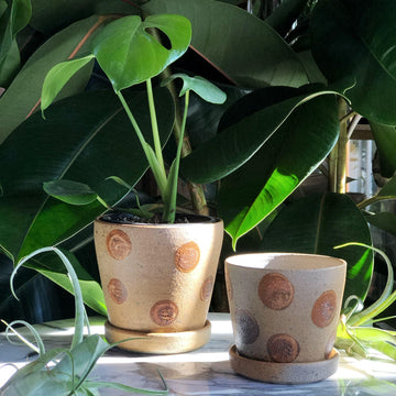 Casuarina Tree Spots Planter Sandra Bowkett handmade ceramics homewares earthy greenery plants monstera deliciosa
