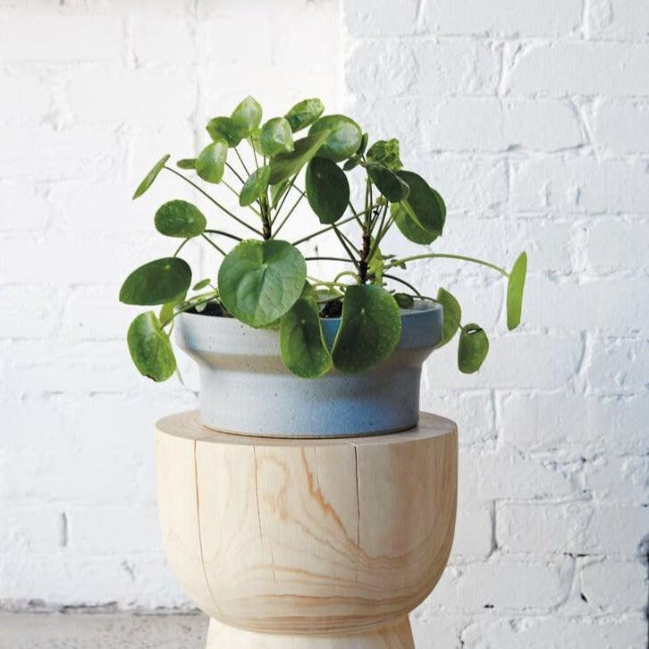 Funnel Low Planters by Anchor Ceramics