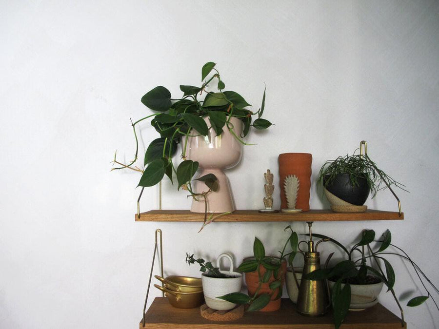 Nappula Planter with Philodendron cordatum (Heart Leaf Philodendron)