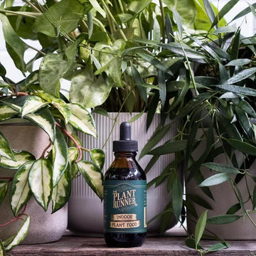 Liquid Indoor Plant Food by Plant Runnder with Hoya