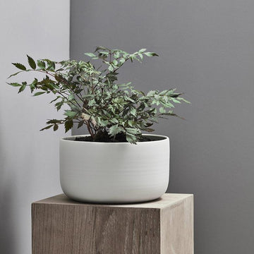 Esko Planter in White