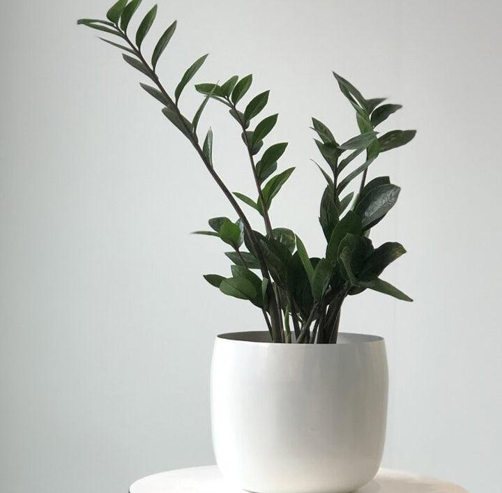 Spun Planter in White by Lightly Design