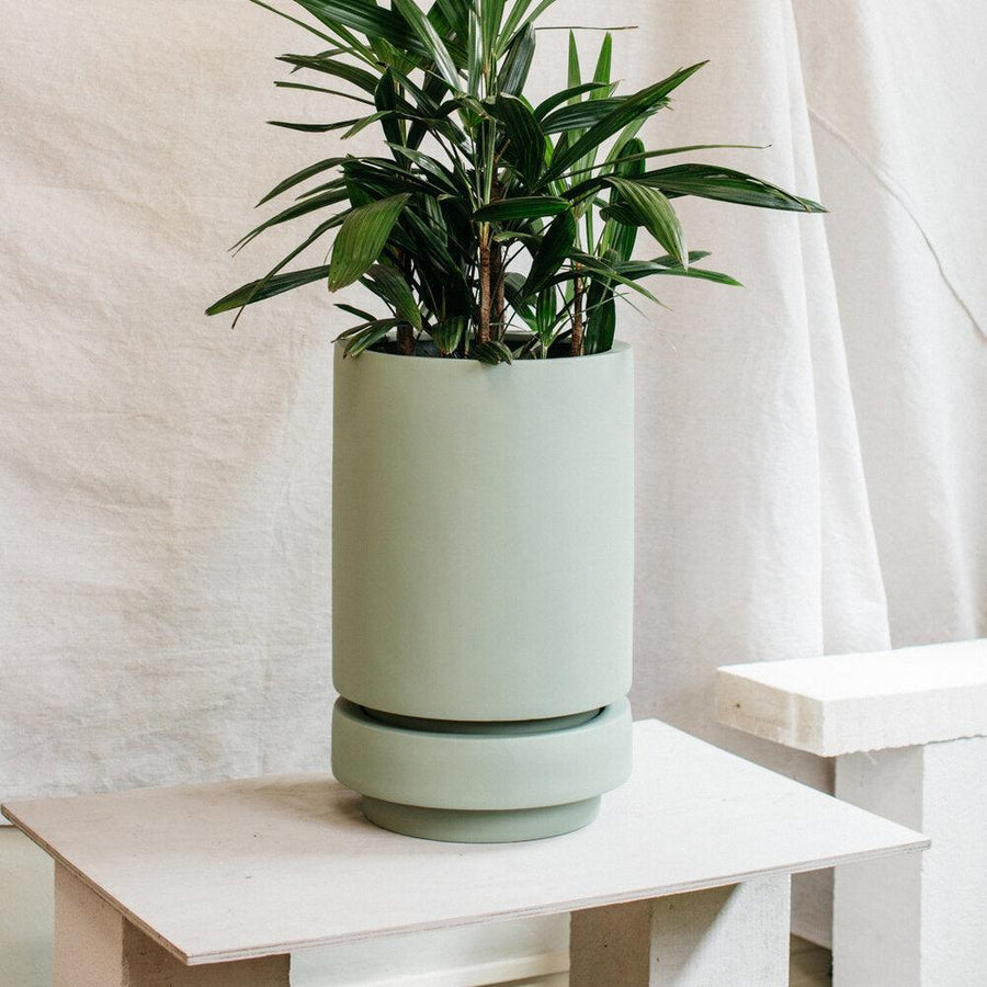 Tall Pier Planter agave by The Plant Society