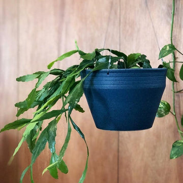 Shibori Blue Hanging Ridge Planter by Alison Frith