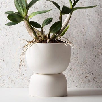 Raw Earth Plant Stand Pot by Angus & Celeste