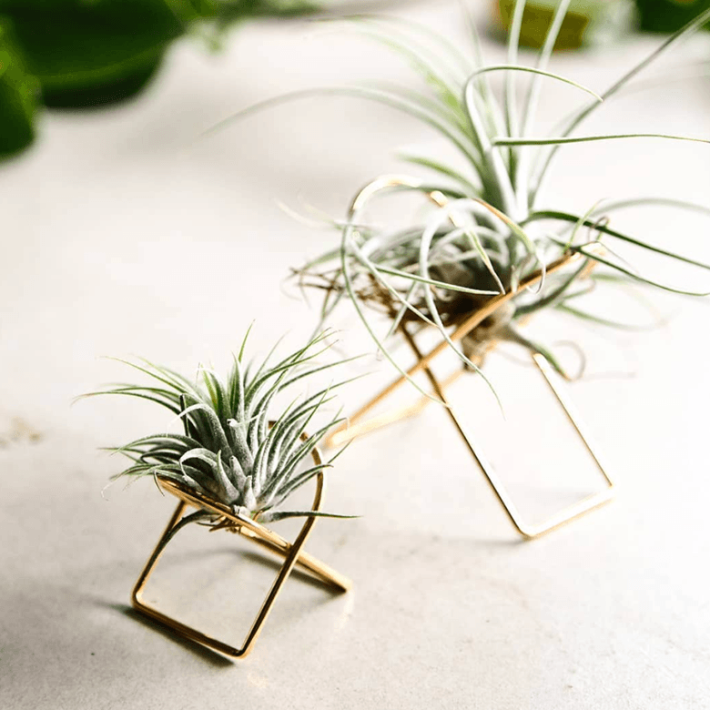 Arc Tillandsia Stand Ivy Muse air plant brass