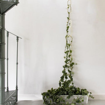 Brass Support by Botanopia - THE PLANT SOCIETY ONLINE OUTPOST