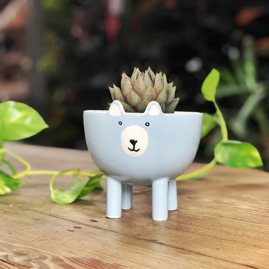 Footed Bear Planter