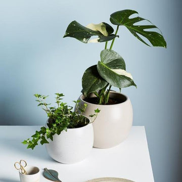 Bower Planter by Evergreen Collective - THE PLANT SOCIETY ONLINE OUTPOST