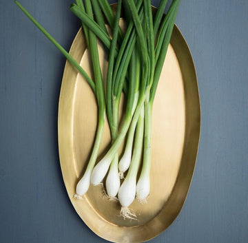 Oval Brass Trays by Fog Linen