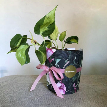 Gift Wrapping Service - Wrapping Paper
