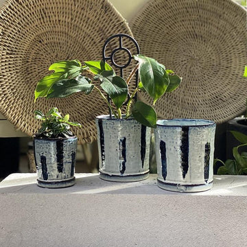 Indigo Planter - THE PLANT SOCIETY ONLINE OUTPOST
