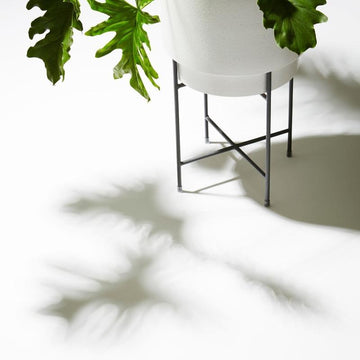 Charcoal Iris Plant Stand by Evergreen Collective painted metal philodendron selloum hope