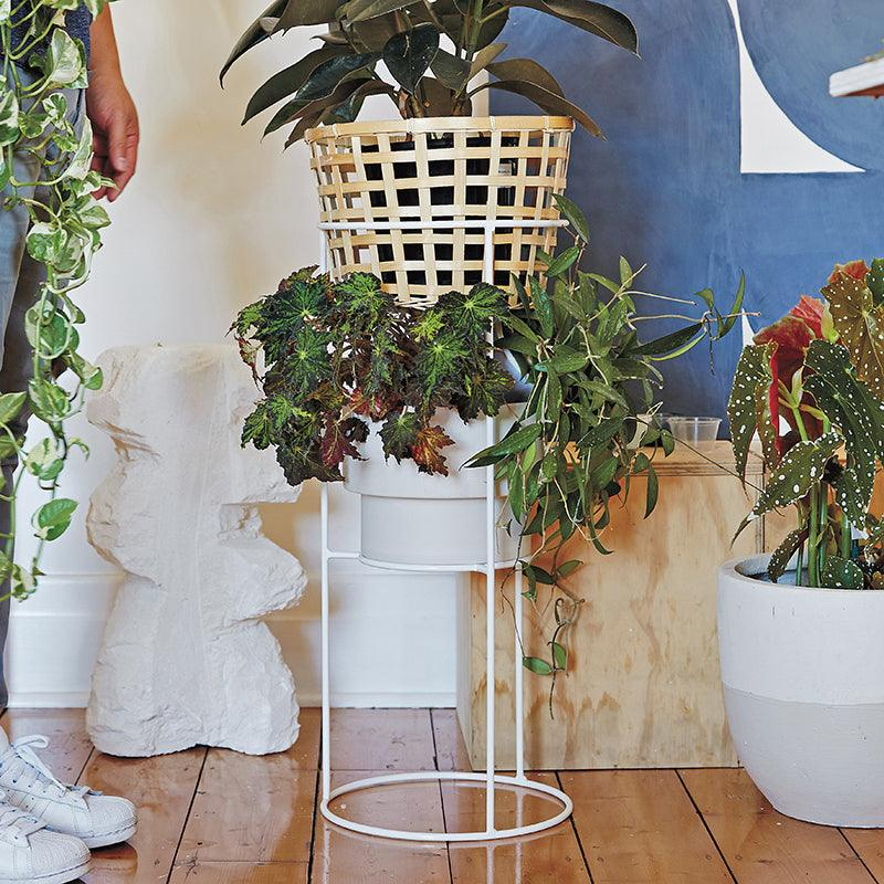 Comet Stand by Ivy Muse white metal greenery plants ficus elastica rubber plant begonia maculata hoya evergreen collective sonny