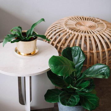 Botanical Family Pot in Brass by HAY (PRE-ORDER Early October) - THE PLANT SOCIETY ONLINE OUTPOST
