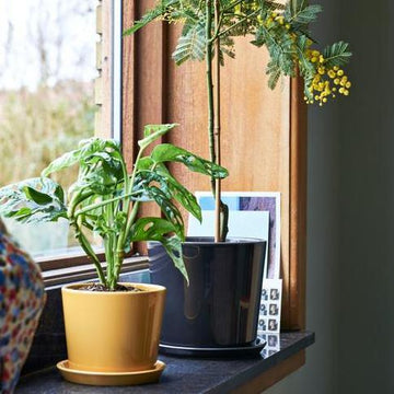 Botanical Family Pot in Warm Yellow by HAY (PRE-ORDER Early October)