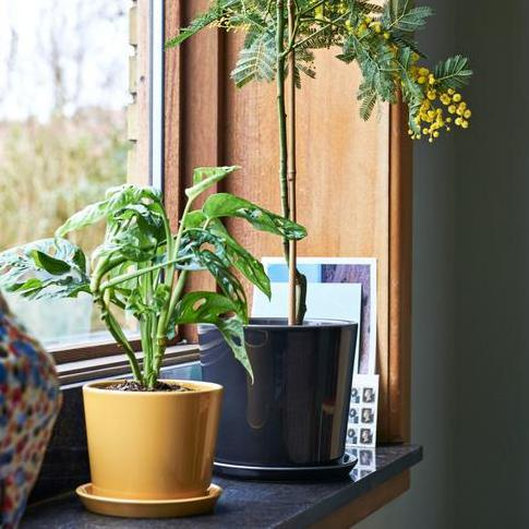 Botanical Family Pot in Warm Yellow by HAY (PRE-ORDER Early October) - THE PLANT SOCIETY ONLINE OUTPOST