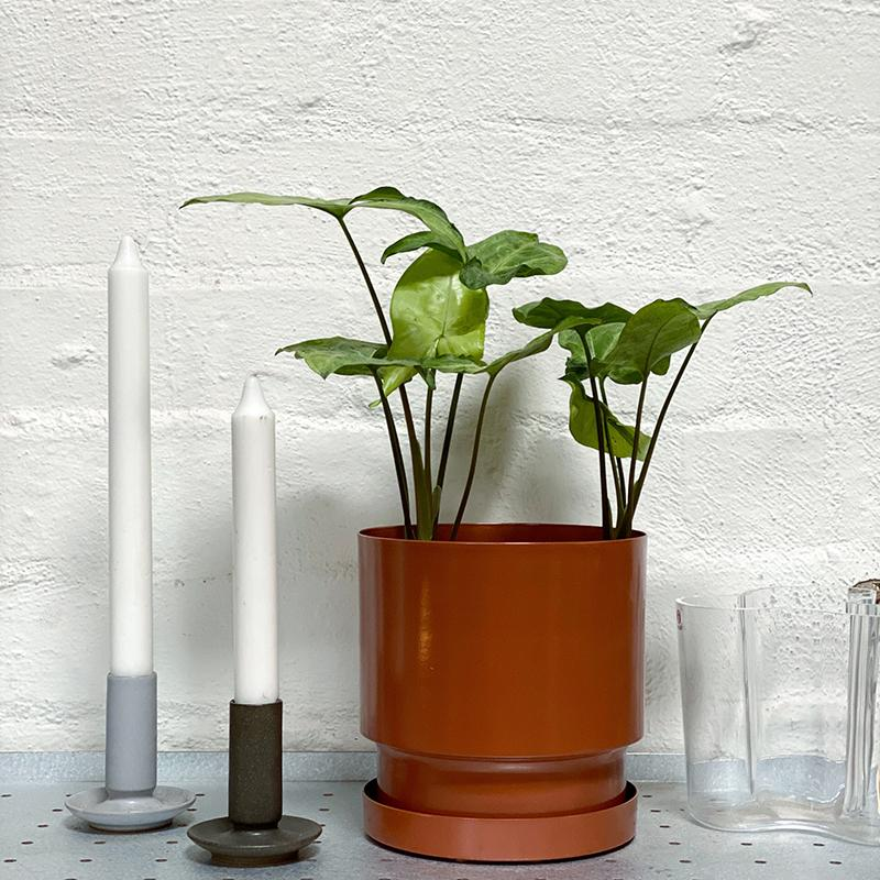 Arc Planter by Lightly Designs