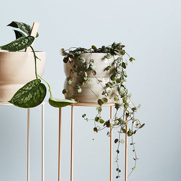 Luna Planter by Evergreen Collective - THE PLANT SOCIETY ONLINE OUTPOST