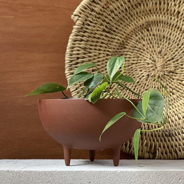 Metal Tri Legged Bowl Planter - THE PLANT SOCIETY ONLINE OUTPOST