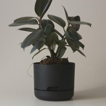 Self Watering Planter 375mm by Mr Kitly - THE PLANT SOCIETY ONLINE OUTPOST