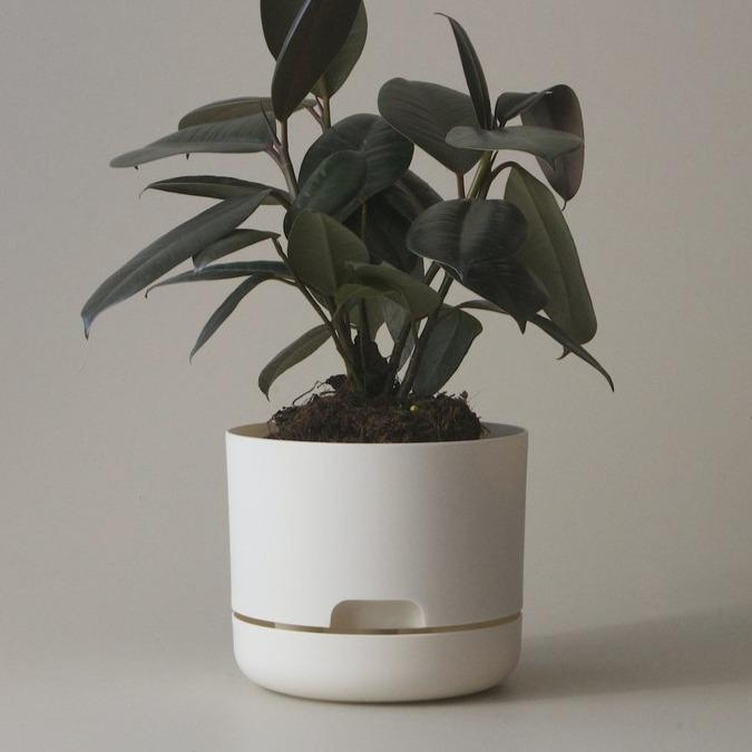 Self Watering Planter 250mm by Mr Kitly - THE PLANT SOCIETY ONLINE OUTPOST