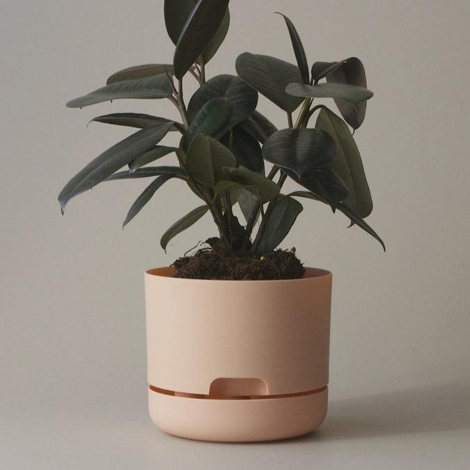 Self Watering Planter 170mm by Mr Kitly - THE PLANT SOCIETY ONLINE OUTPOST