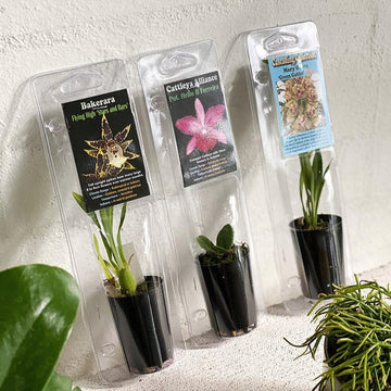 Orchid Babies - THE PLANT SOCIETY ONLINE OUTPOST