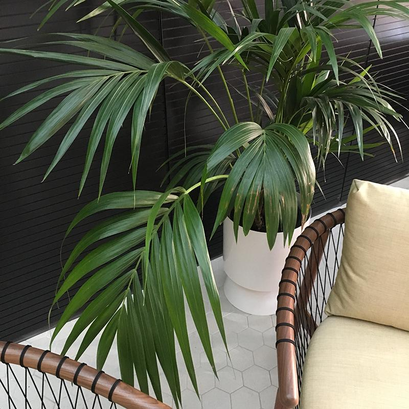 Large Palm Springs Planter with Kentia Palm by Lightly Design