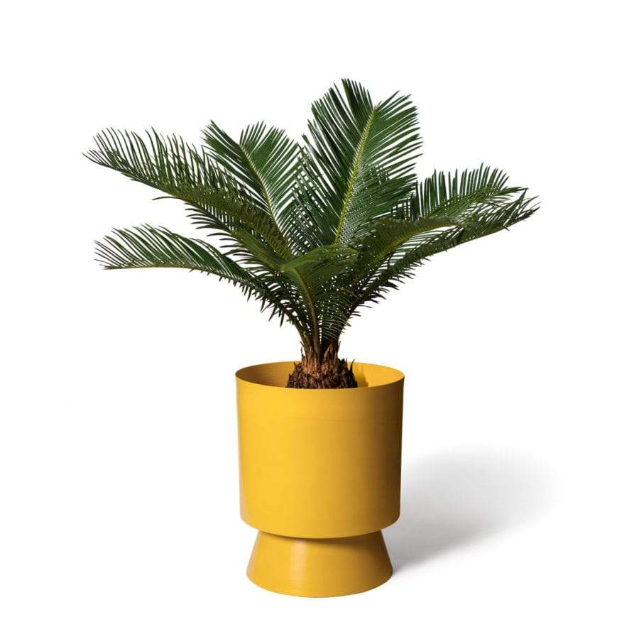 Large Palm Springs in Tumeric by Lightly Design