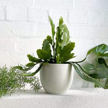 Dido Planter by Papaya