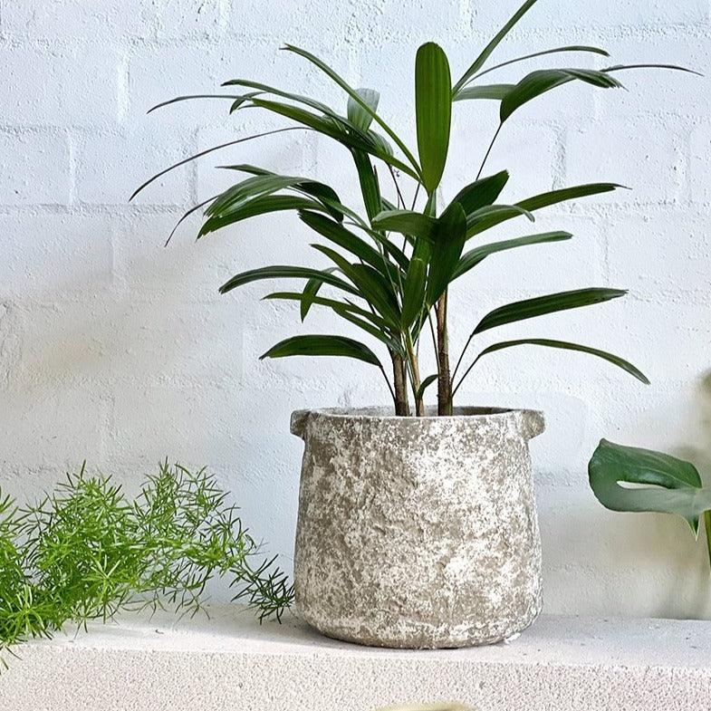 Masa Planter by Papaya