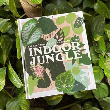 The Leaf Supply Guide to Creating your Indoor Jungle by Lauren Camilleri & Sophia Kaplan - THE PLANT SOCIETY ONLINE OUTPOST